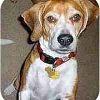 Adopt A Pet :: Bob Marley - Phoenix, AZ