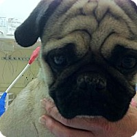 Adopt A Pet :: Max - Anaheim, CA