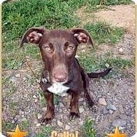 Adopt A Pet :: *Calla* - Hancock, MI