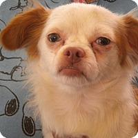 Adopt A Pet :: Archie - Fresno, CA