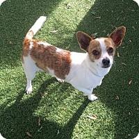 Adopt A Pet :: Addison - Surrey, BC