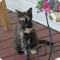 Adopt A Pet :: Haley - Oberlin, OH
