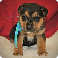Adopt A Pet :: Mario ~ ADOPTED! - Saratoga Springs, NY