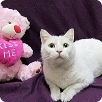Adopt A Pet :: ENYA - Lexington, NC
