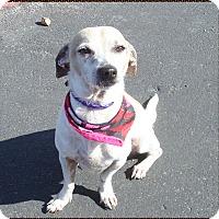 Adopt A Pet :: Tommy - Las Vegas, NV