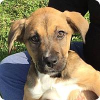 Adopt A Pet :: Emaline - CUMMING, GA