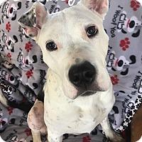 Adopt A Pet :: Delaney - Toledo, OH