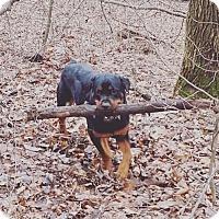 Adopt A Pet :: Caine - New Philadelphia, OH