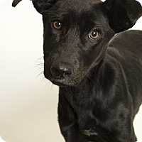 Adopt A Pet :: Persephone - Baton Rouge, LA