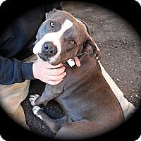 Adopt A Pet :: Amara - Cypress, CA