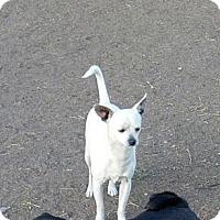 Adopt A Pet :: Chance - Anaheim, CA