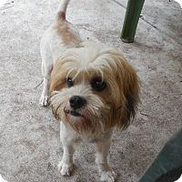Adopt A Pet :: Howie - Ormond Beach, FL