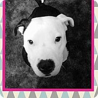 Adopt A Pet :: Pacifica - Huntington Beach, CA