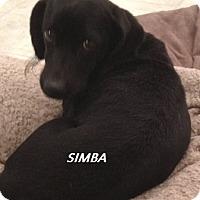 Adopt A Pet :: Simba (in adoption process) - El Cajon, CA