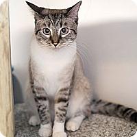 Adopt A Pet :: Kendeesa - Shelton, WA