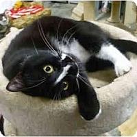 Adopt A Pet :: Smiley - Pendleton, OR