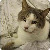 Adopt A Pet :: Baby - Tully, NY