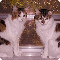 Adopt A Pet :: Millie and Tillie - Miami, FL