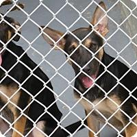 Adopt A Pet :: Radar - Inverness, FL