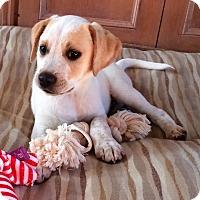 Adopt A Pet :: *Dylan - PENDING - Westport, CT