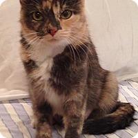 Adopt A Pet :: Bell - Scottsdale, AZ