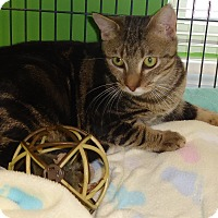 Adopt A Pet :: Hollywood - Barnwell, SC