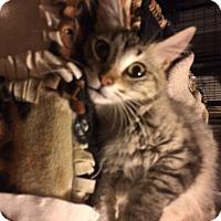 Adopt A Pet :: Ritz - Tracy, CA