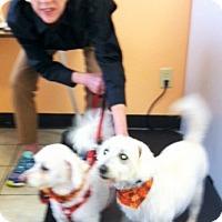 Adopt A Pet :: Tucker - Plain City, OH