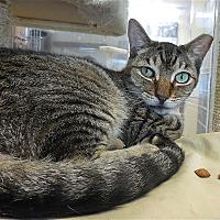 Adopt A Pet :: Callan - Carmel, NY