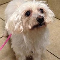 Adopt A Pet :: Lizzie (TN) - Chattanooga, TN