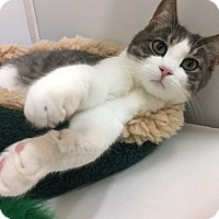 Adopt A Pet :: Argyle - San Carlos, CA