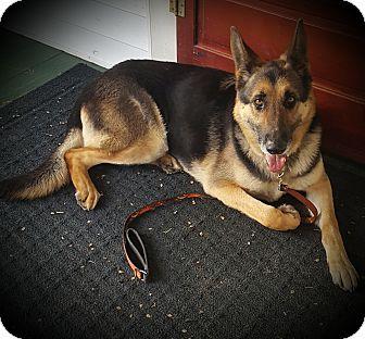 German Shepherd Dog Mix Dog for adoption in Portland, Maine - Thomas