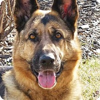 Adopt A Pet :: Jazmine *Miracle Dog* - Gretna, NE
