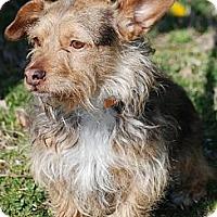 Adopt A Pet :: Arlo - Providence, RI
