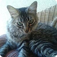 Adopt A Pet :: Shayna - Escondido, CA
