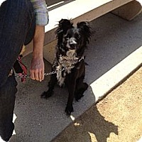 Adopt A Pet :: Destiny - North Hollywood, CA