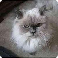 Adopt A Pet :: Sweet Pea - Columbus, OH