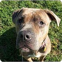 Adopt A Pet :: Frannie - Albany, NY