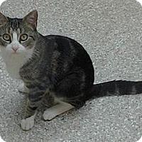 Adopt A Pet :: Zazzles - Danbury, CT