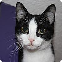 Adopt A Pet :: Fudge (LE) - Little Falls, NJ