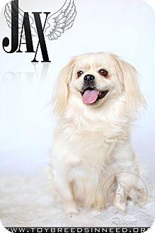 Pekingese Mix Dog for adoption in Frederick, Maryland - Jax
