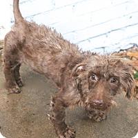 Adopt A Pet :: Eccles - MEET ME - Norwalk, CT
