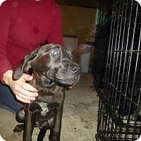 Adopt A Pet :: Brynn - Glastonbury, CT