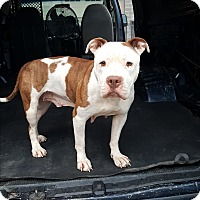 Adopt A Pet :: JenLee - Lexington, KY