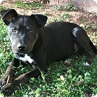 Adopt A Pet :: Rhino - North Brunswick, NJ