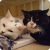 Adopt A Pet :: Rodrigo - Salisbury, MA