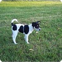 Adopt A Pet :: Jolie - Adamsville, TN