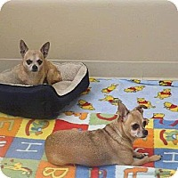 Adopt A Pet :: Dolly - Hubertus, WI