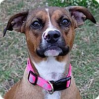 Adopt A Pet :: Belle - Baton Rouge, LA