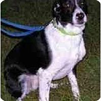 Adopt A Pet :: Poko - Rigaud, QC